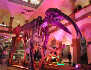 Die 20. Lange Nacht der Münchner Museen am Samstag, 20. Oktober 2018